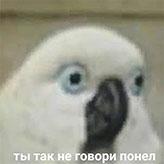 mem_26