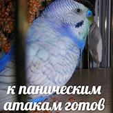 mem_31